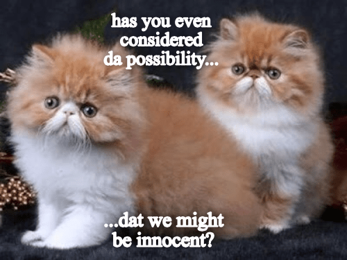 Cat - has you even considered da possibility... ..dat we might be innocent?