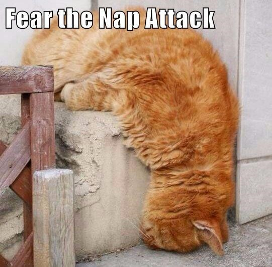 Cat - Fear the Nap Attack
