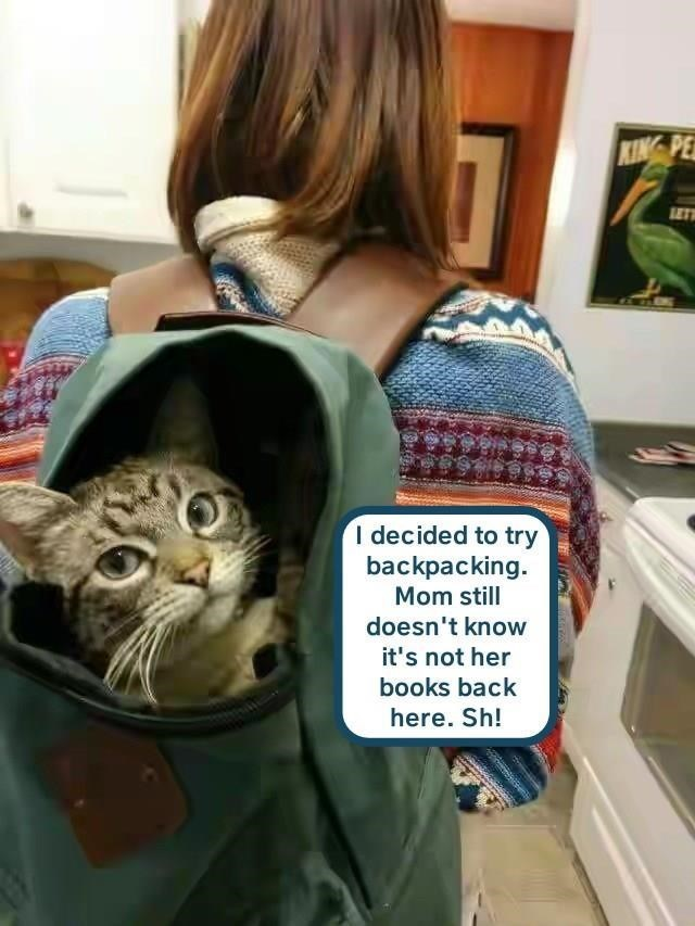 Cat - LET I decided to try backpacking Mom still doesn't know it's not her books back here. Sh!