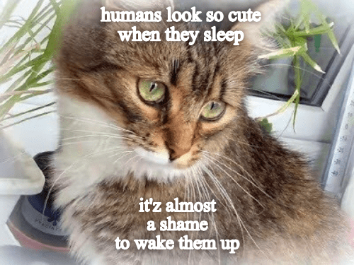 Cat - humans look so cute when they sleep itz almost a shame to wake them up
