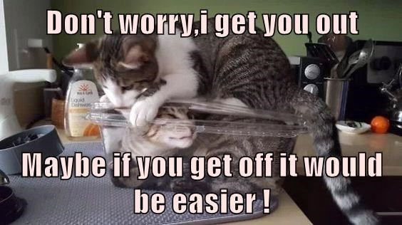 Cat - Don't worry.i get you out Dishwos Maybe if you get off it would be easier!