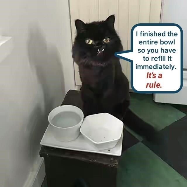 Cat - I finished the entire bowl so you have to refill it immediately It's a rule.