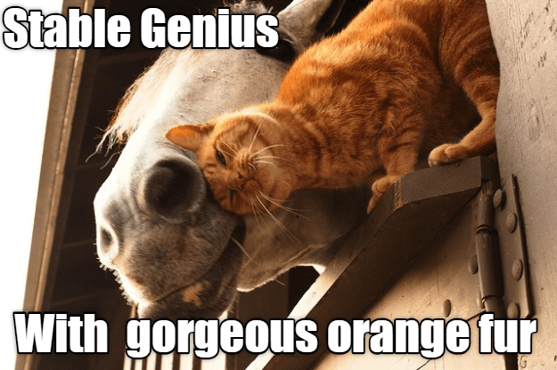 Photo caption - Stable Genius With gorgeous orange tur