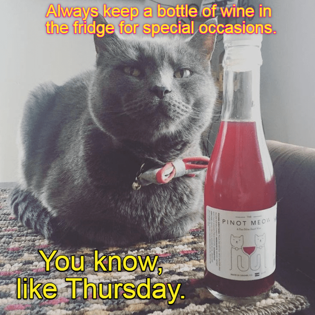 Be Like Yay Thursday Lolcats Lol Cat Memes Funny Cats Funny Cat Pictures With Words On Them Funny Pictures Lol Cat Memes Lol Cats Find the newest its thursday meme. funny pictures lol cat memes lol cats