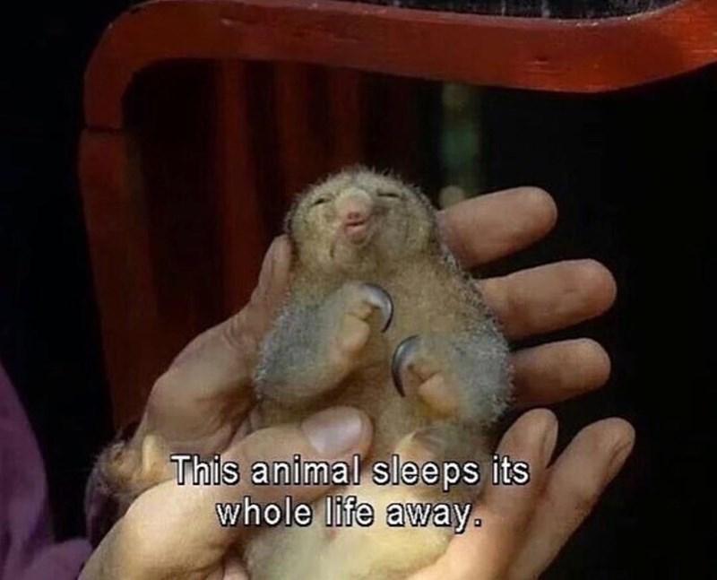 Organism - This animal sleeps its whole life away.