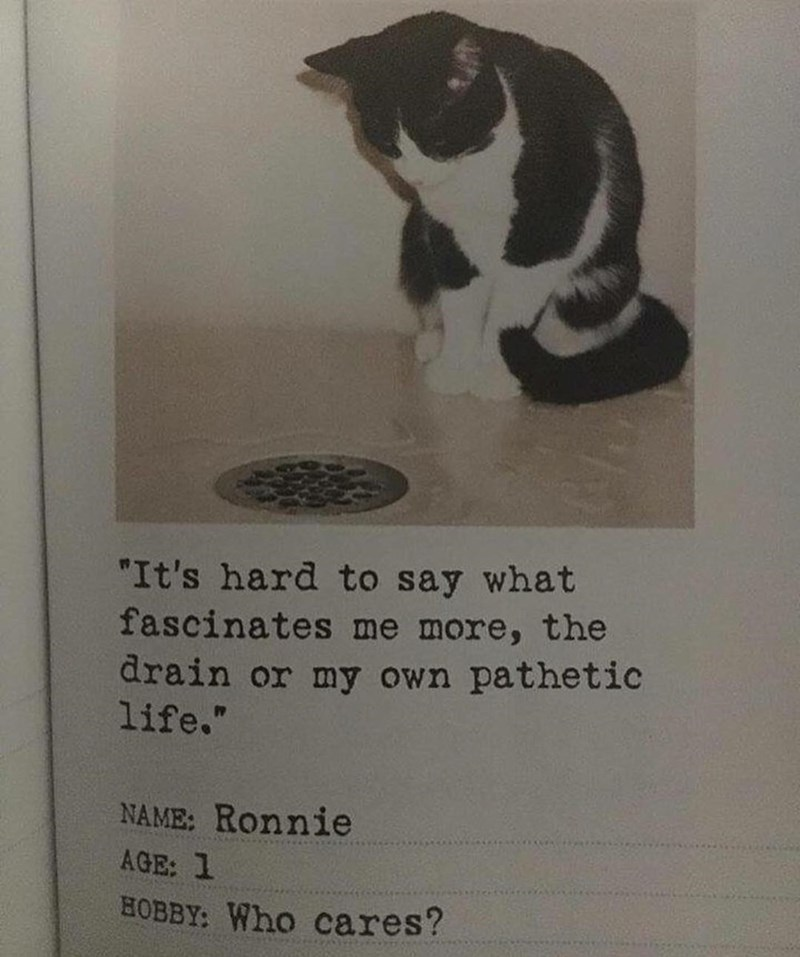 """Cat - """"It's hard to say what fascinates me more, the drain or my own pathetic life."""" NAME: Ronnie AGE: 1 HOBBY: Who cares?"""