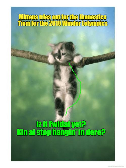 Cheezburger Image 9115098368