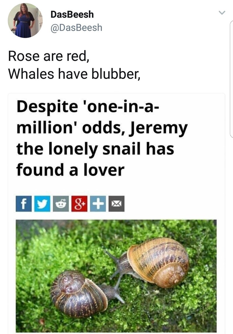 Snails and slugs - DasBeesh @DasBeesh Rose are red, Whales have blubber, Despite 'one-in-a- million' odds, Jeremy the lonely snail has found a lover fy 8