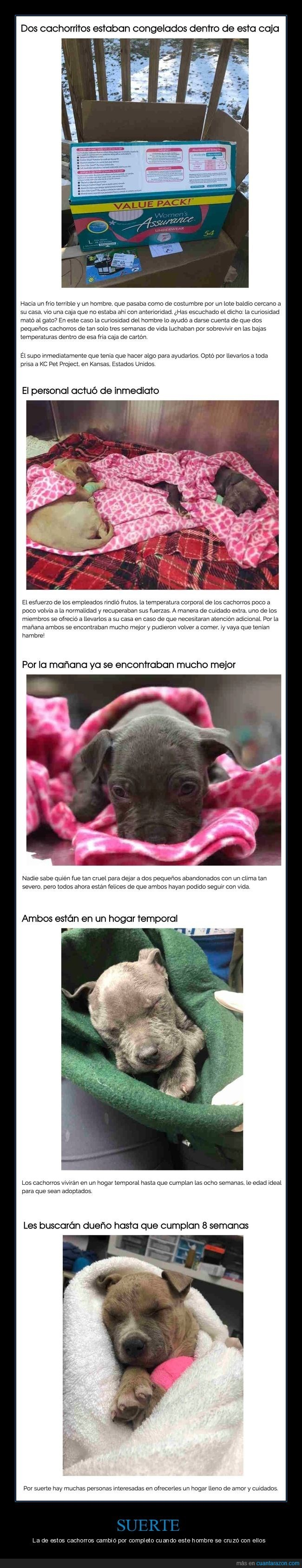 historia tragica de perros abandonados que acaba bien