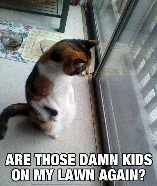 cats hate kids - Cat - ARE THOSE DAMN KIDS ON MY LAWN AGAIN?