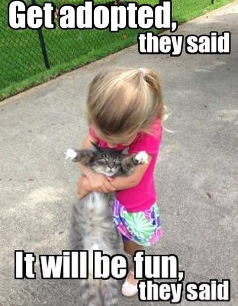 cats hate kids - Photo caption - Getadopted, theysaid It will be fun, they sald