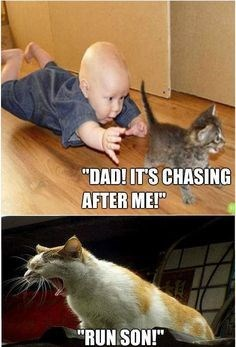 """cats hate kids - Cat - """"DAD! IT'S CHASING AFTER ME! RUN.SON!"""""""