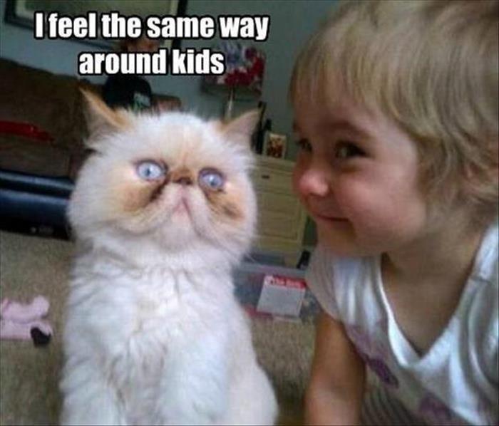 cats hate kids - Cat - I feel the same way around kids