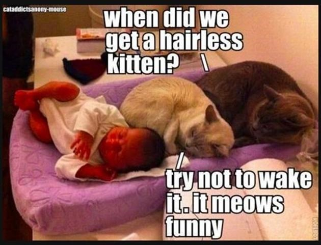 cats hate kids - Photo caption - cataddictsanony-mouse when did we geta hairless kitten? try not to wake it.it meows funny COFLO