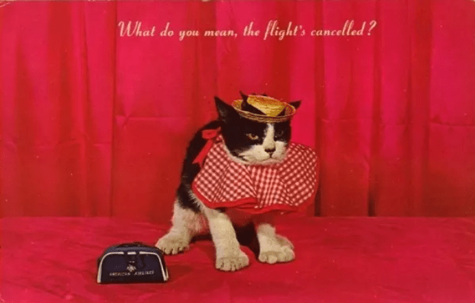 Cat - the flight's cancelled ? What do you mean