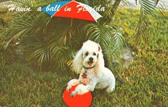 Dog - a ball in Fenda Hauin