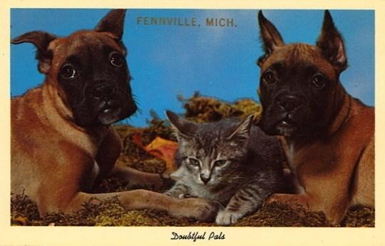 Vertebrate - FENNVILLE, MICH. Doubiful Pals