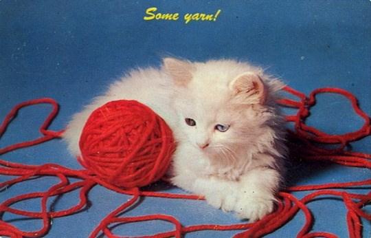 Cat - Some yarn!