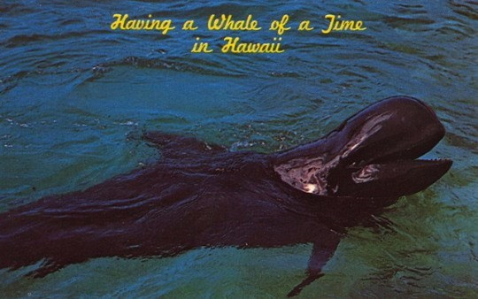 Dolphin - Having a Whale of in Hawai a Jime