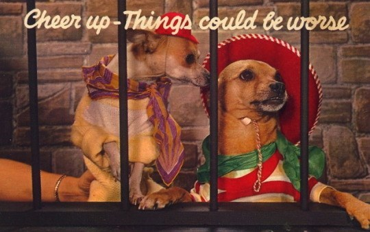Dog - Cheer up-Things could be worse