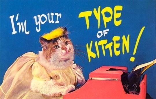 Cat - Vm your TYPE OF KITEN