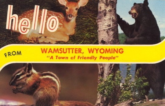 """Wildlife - hello WAMSUTTER, WYOMING """"A Town of Friendly People'' FROM"""