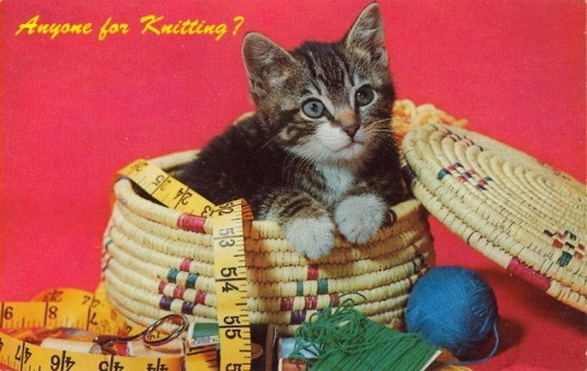 Cat - Anyone for Knitting? 6 24 25 4416 47 54