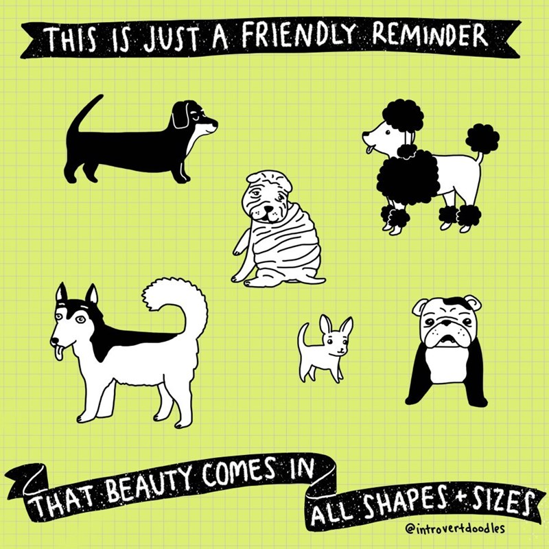 Dog breed - THIS IS JUST A FRIENDLY REMINDER THAT BEAUTY COMES IN ALL SHAPES SIZES @introvertdood les