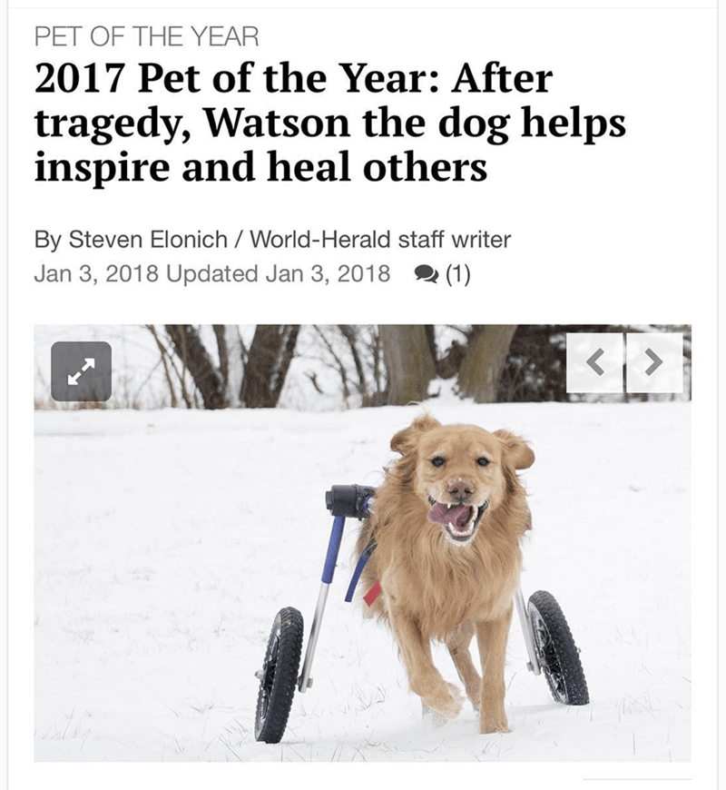 Dog - PET OF THE YEAR 2017 Pet of the Year: After tragedy, Watson the dog helps inspire and heal others By Steven Elonich / World-Herald staff writer (1) Jan 3, 2018 Updated Jan 3, 2018 >