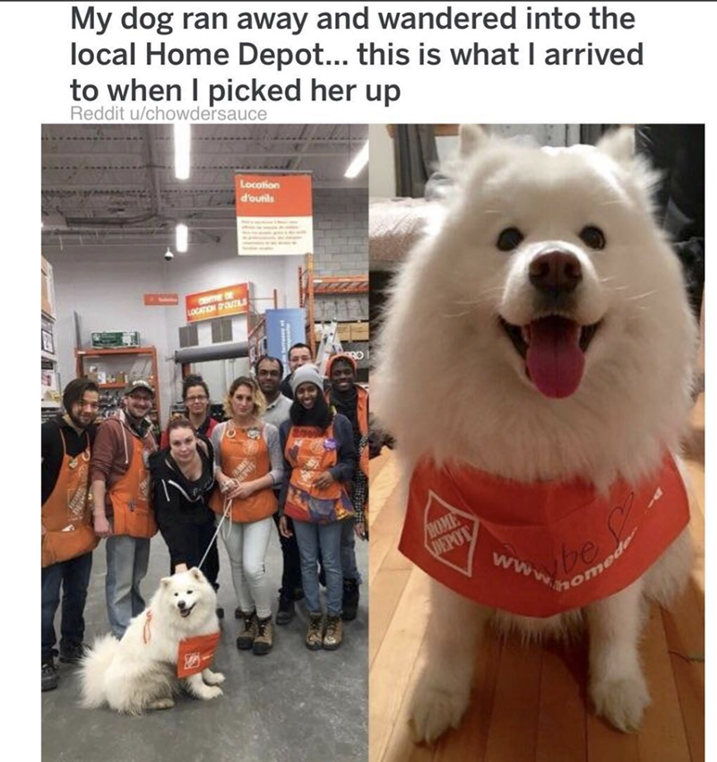 Dog - My dog ran away and wandered into the local Home Depot... this is what I arrived to when I picked her up Reddit u/chowdersauce Locotion d'outils LOCATION OUTI HOME DEPOT www be omed