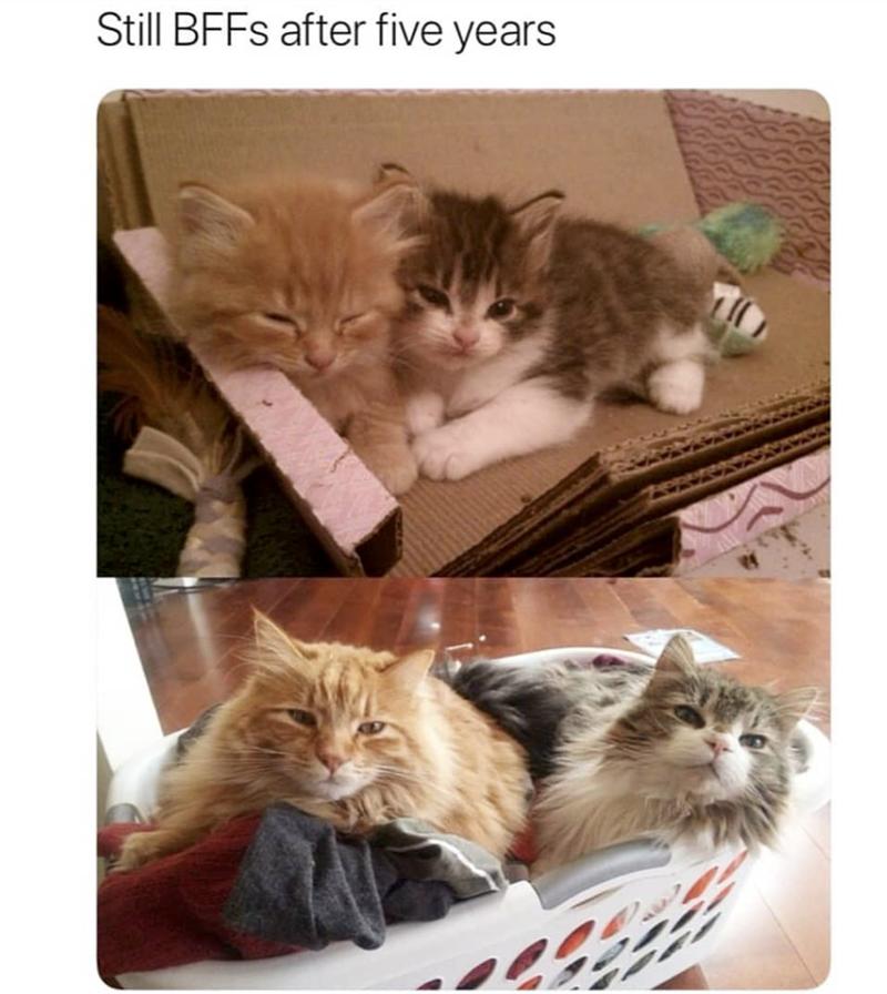 Cat - Still BFFS after five years
