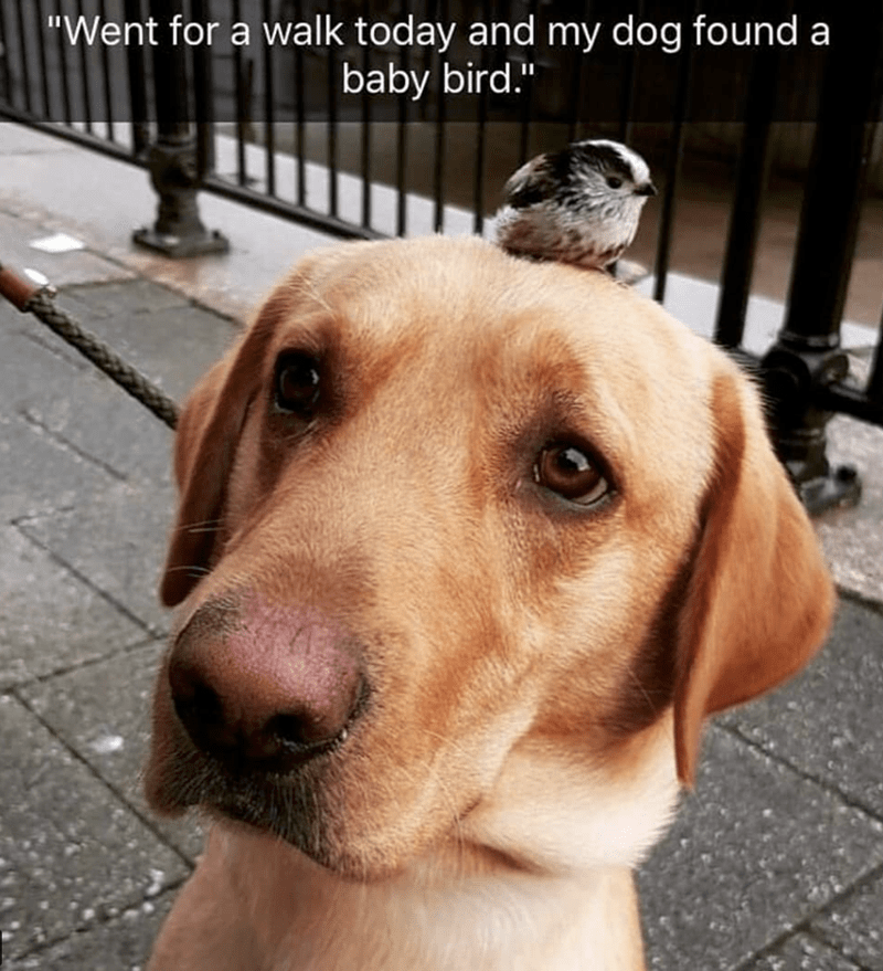 """Dog - """"Went for a walk today and my dog found a baby bird."""""""