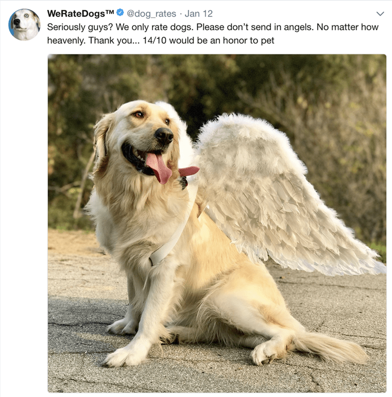 Dog - WeRateDogs TM @dog_rates Jan 12 Seriously guys? We only rate dogs. Please don't send in angels. No matter how heavenly. Thank you... 14/10 would be an honor to pet