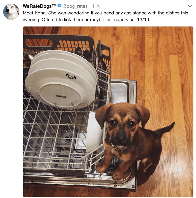Dog - WeRateDogsTM @dog_rates 11h Meet Kona. She was wondering if you need any assistance with the dishes this evening. Offered to lick them or maybe just supervise. 13/10