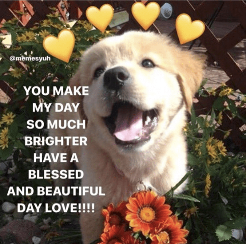 Dog - @memesyuh YOU MAKE MY DAY SOMUCH BRIGHTER HAVE A BLESSED AND BEAUTIFUL DAY LOVE!!!!