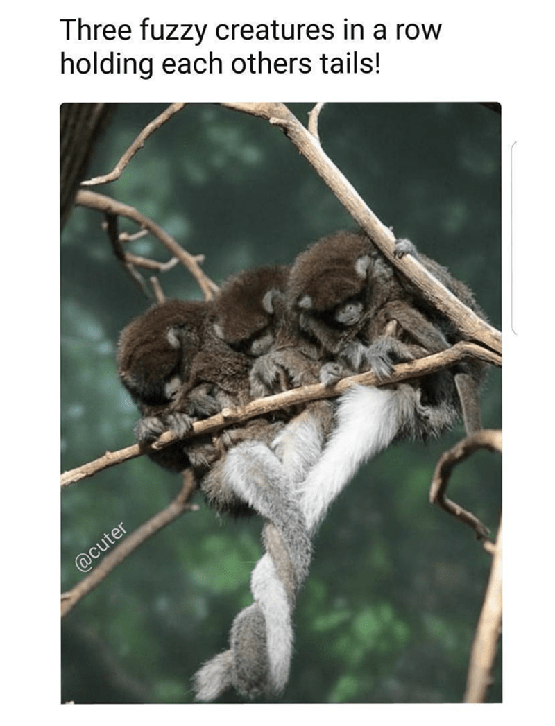 Organism - Three fuzzy creatures in a row holding each others tails! @cuter