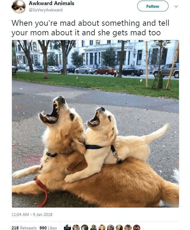 Dog - Awkward Animals Follow @SoVeryAwkward When you're mad about something and tell your mom about it and she gets mad too 11:04 AM -9 Jan 2018 218 Retweets 990 Likes