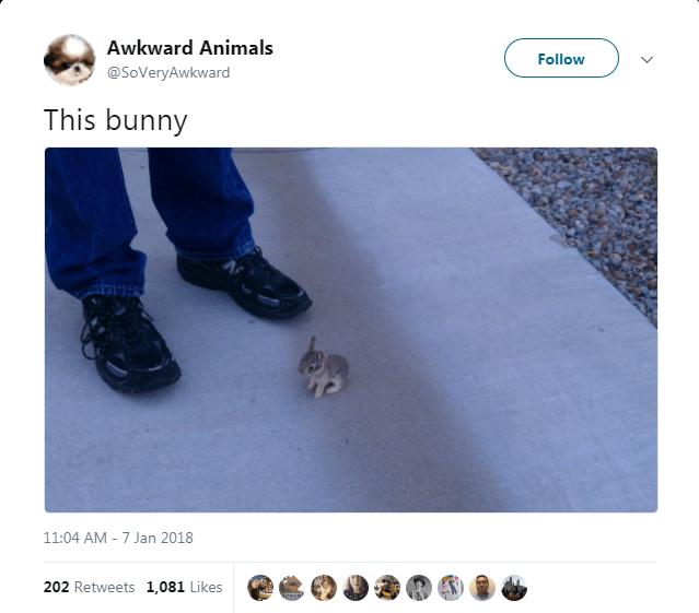 Text - Awkward Animals Follow @SoVeryAwkward This bunny 11:04 AM - 7 Jan 2018 202 Retweets 1,081 Likes