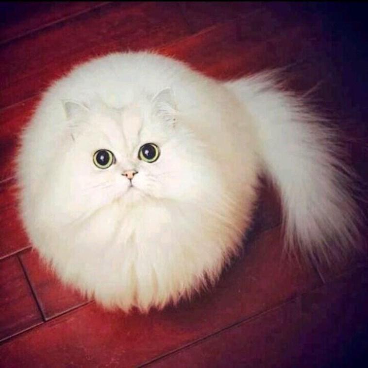 very round - Cat