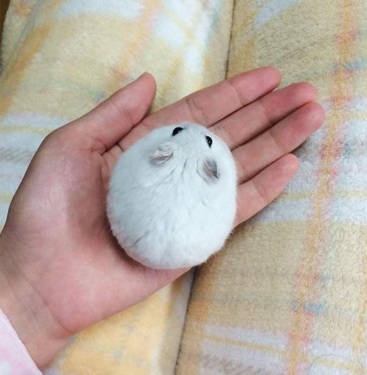 very round - Hand
