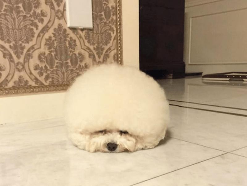very round - Dog