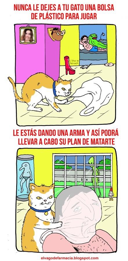 nunca le dejes a tu gato una bolsa plastica