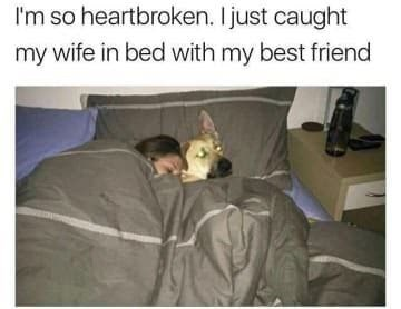 dog memes dog in bed with woman - I'm so heartbroken. I just caught my wife in bed with my best friend