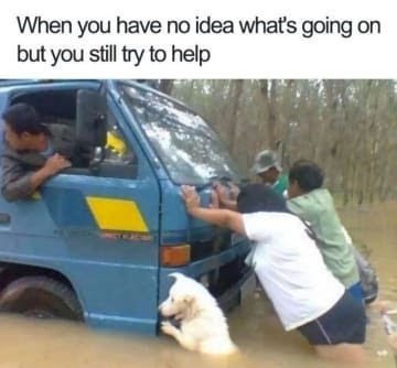 dog memes truck stuck in flood water people and dog pushing truck When you have no idea what's going on but you still try to help
