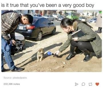 dog memes reporter holding microphone to tiny puppy is it true that you've been a very good boy Source pleatedjeans 232 396 notes
