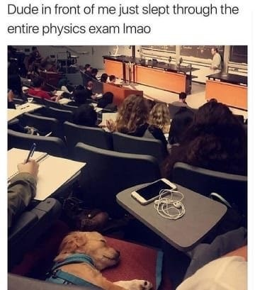 dog memes puppy sleeping on chair in lecture theater Dude in front of me just slept through the entire physics exam Imao