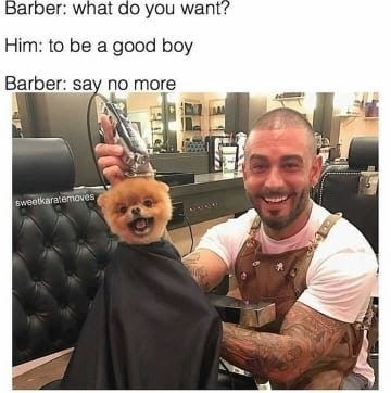 dog memes - Dog in barber cape being held by barber - Barber: what do you want? Him: to be a good boy Barber: say no more Sweetkaratemoves