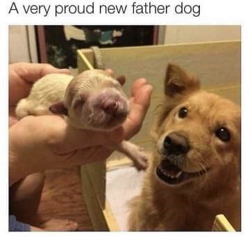 dog memes someone holding tiny newborn puppy and father dog looking happy qA very proud new father dog