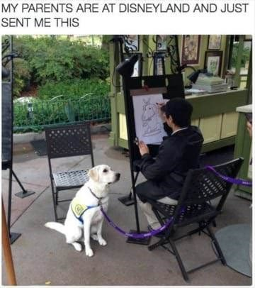 dog memes dog sitting still while getting caricature at disneyland