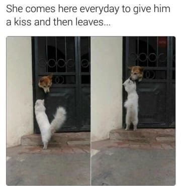 dog memes cat visits dog every day to give him kiss then leaves